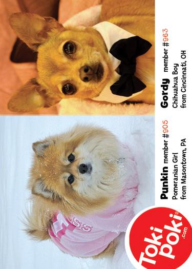 Dog Euphoria Calendar