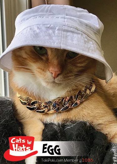 Cats in Hats Collection