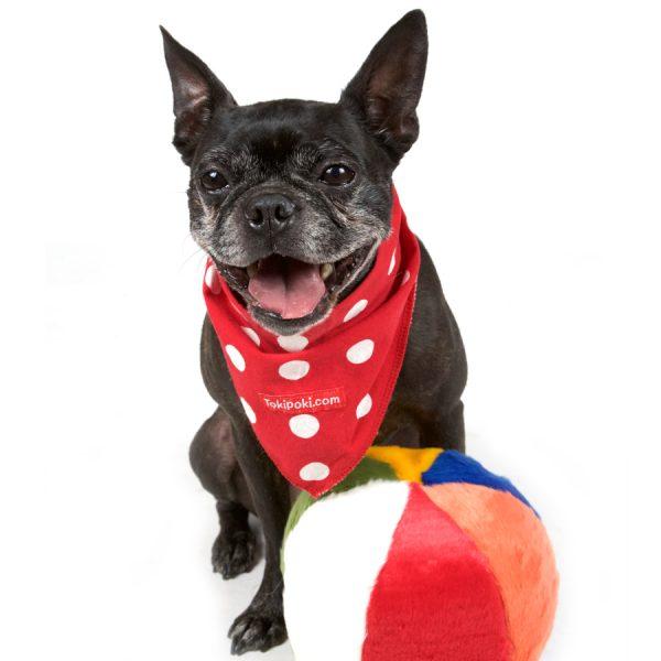 Toki Poki red and white polka dot bandana