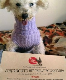 Bean - certificate of pawticipation