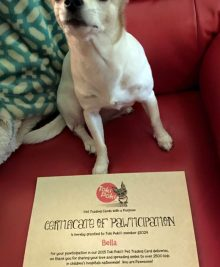 Bella - certificate of pawticipation