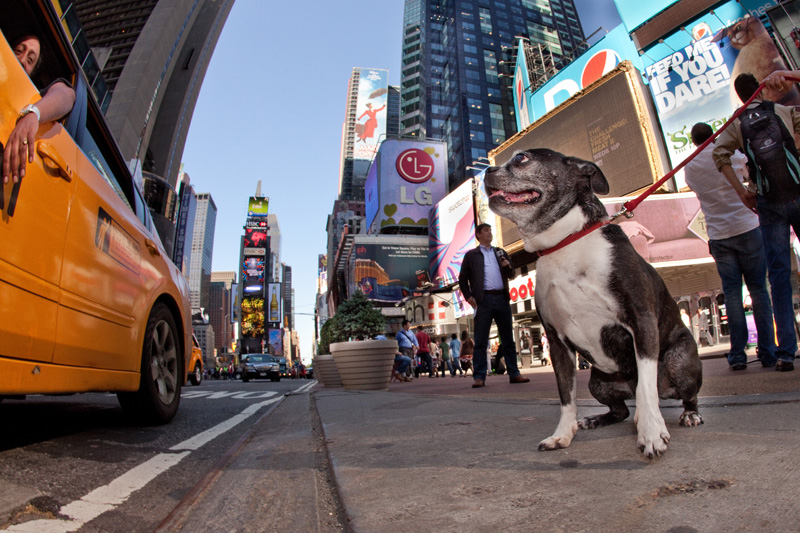 Toki in Times Square, NYC
