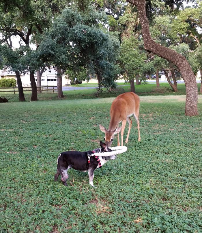 Toki and her Deer Friend