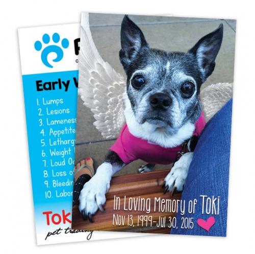 In Loving Memory of Toki
