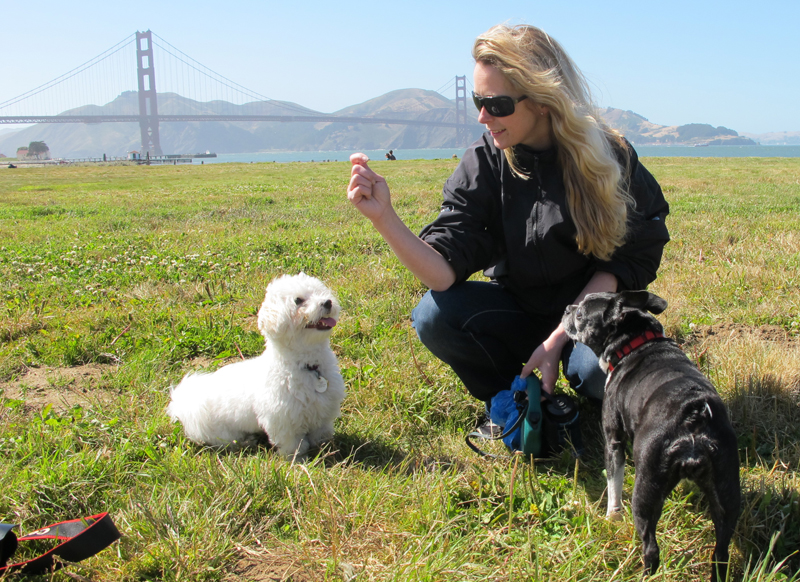 Toki Making Friends in San Francisco