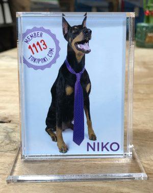 Toki Poki Trading Card Frame