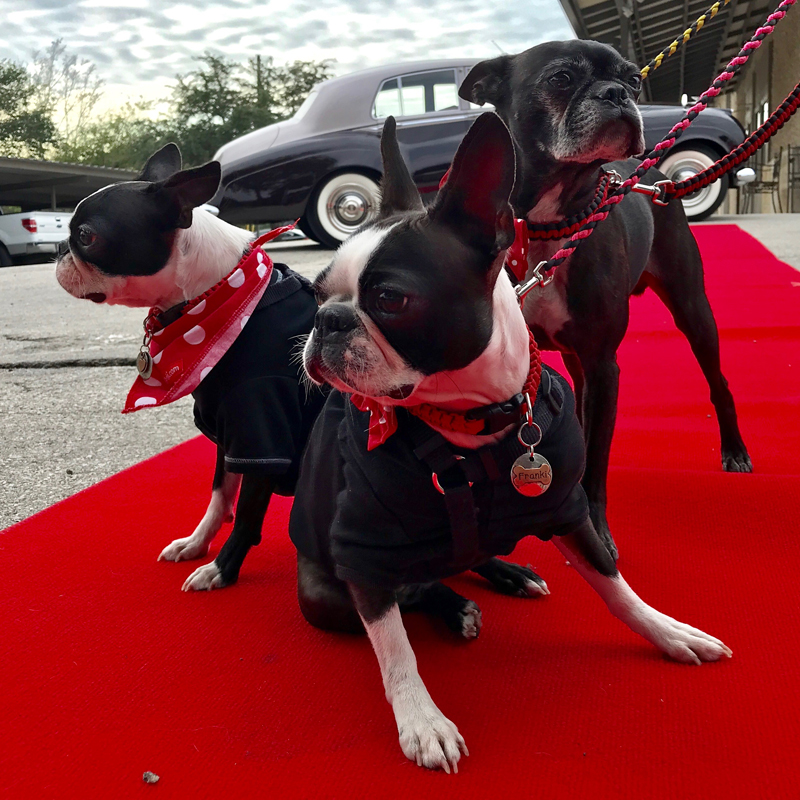 Toki Poki Red Carpet Pawty - Nov 10, 2018