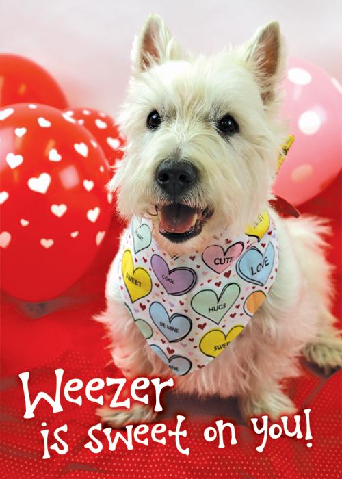Weezer (member #995)