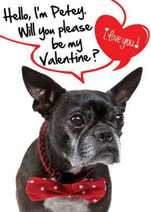 Toki Poki Valentine's Day Pet Trading Card