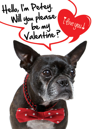 Toki Poki Valentine's Day Pet Trading Card