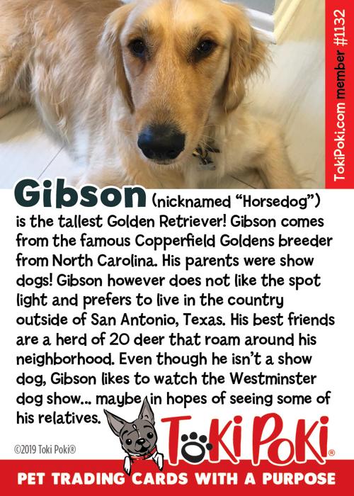 Gibson (Member #1132)