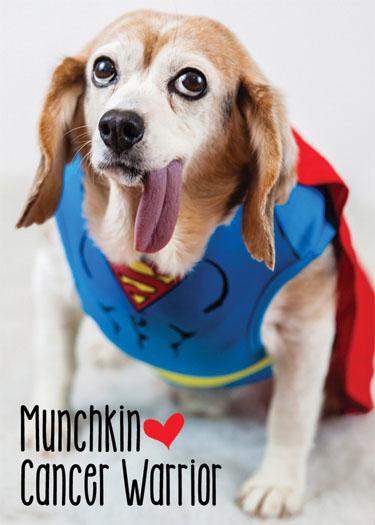 Munchkin (member #973)